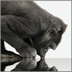 """Jaké je """"gorilí sklo"""" Gorilla Glass?"""